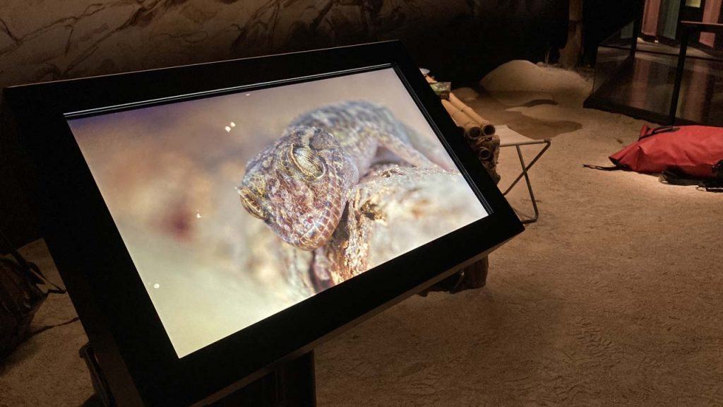 makay, un reptile sur un écran